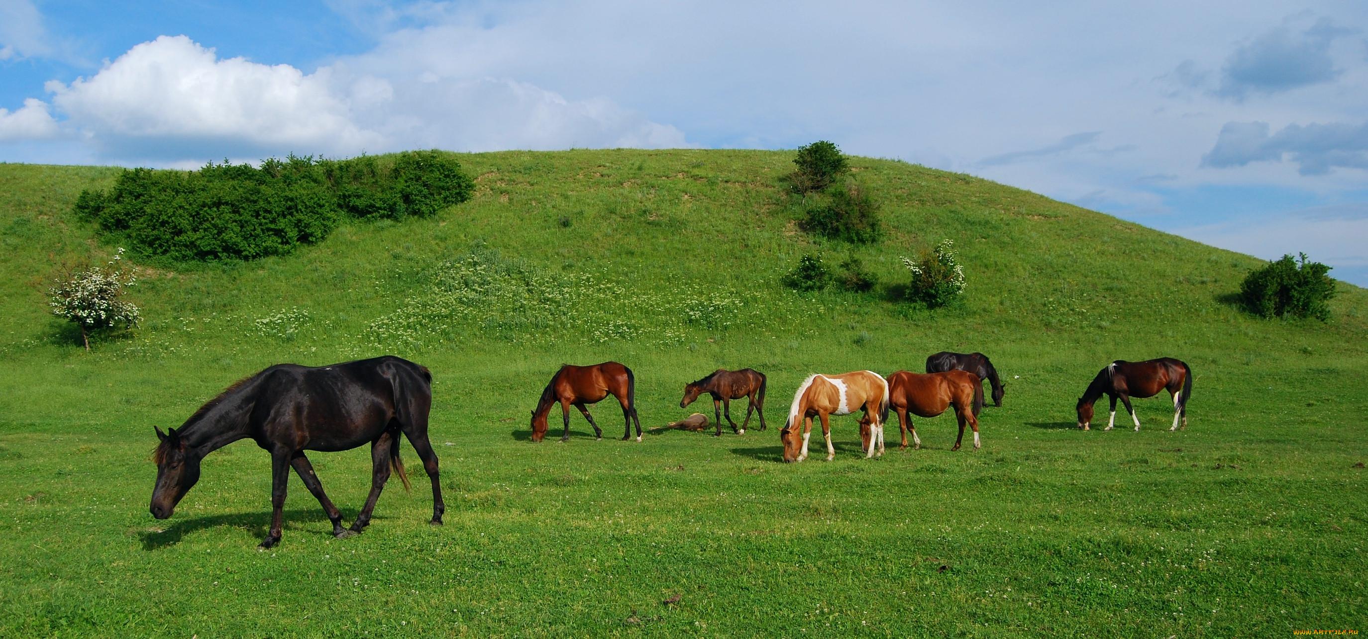 Картинки луга для лошадей